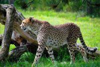 Overloon Zoopark