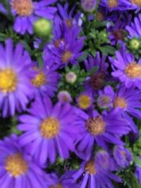 deep in aster blue