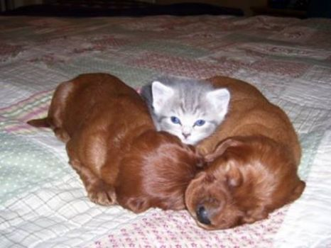 Kitty and 2 puppies