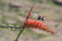 The Happy Humming Bird