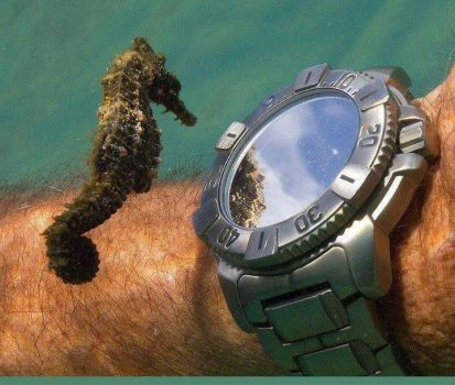 Seahorse and diver