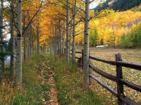 A rail  fence and trees