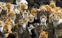 The annual cat convention....