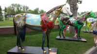 Fancy Painted Horses at Spruce Meadows