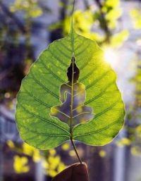 Buddha Leaf
