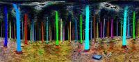 Forest Laser Scan