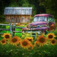 Take-us-for-a-ride-in-the-sunflower-patch
