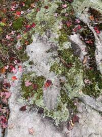 Lichen, Leaves, and Moss on Rock_2