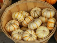Decorative little pumpkins, 63 pieces