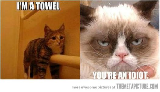 Grumpy and the Towel Cat