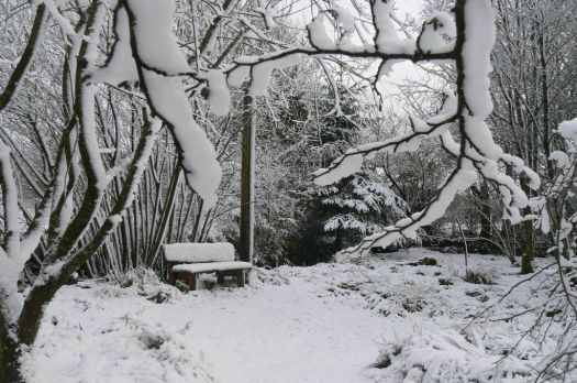snowy old woodland bench