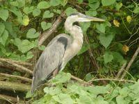 Everglades sentinel