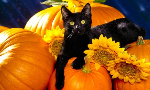 The Black Cat and Halloween