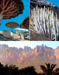 Nature's Wonders #1