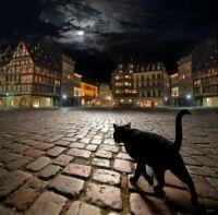 A stray cat in Strasbourg