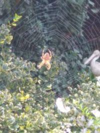 Pavouček za oknem