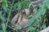 Faultier in Gondwanaland
