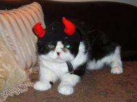Berry-- Mom says I'm a little devil.