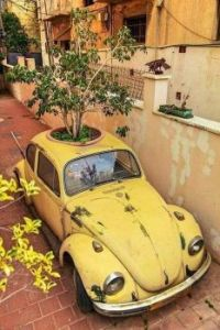 Potted VW