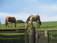 Twin Oaks Riding Ranch, Whitianga, New Zealand