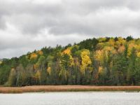 Colorful yellows and greens of fall