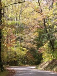 amy's creek in fall