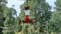 My hummingbird feeder - with a customer