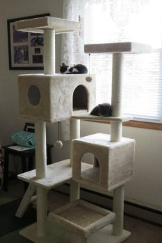 My Cat Tree