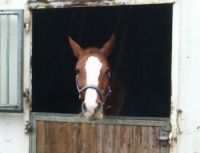 Our old horse. She's now retires. She's eating - do not disturb ;)
