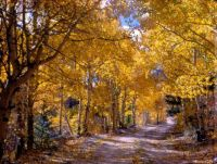 A perfect road in Colorado for a walk with a loved one  (I orig posted this 9'21'17)
