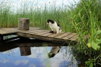 Cat on the water