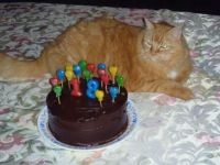 Happy Birthday, Kitty!
