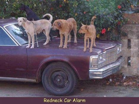 Hillbilly Car Alarm