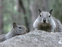 Yosemite Residents