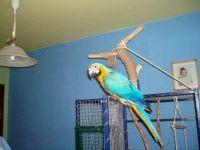 Nový papoušek u mladých