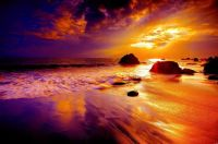 3  ~  'Purple & Gold' ~ S.s.
