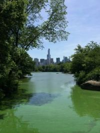 Central Park4