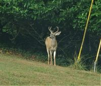 Hello Buck-y!