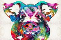 Colorful Pig