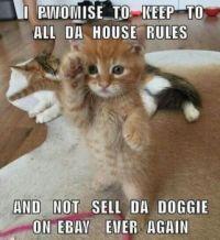 Funny kitty :)