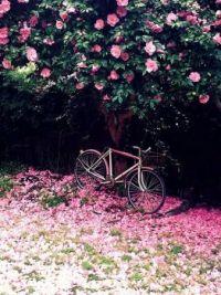 nature's pink carpet