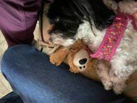charlee with bear