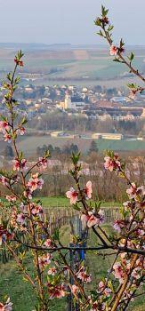 Spring in Austria