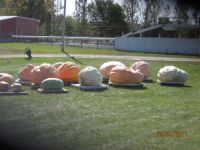 Gigantic Pumpkins are too heavy to be round
