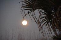 Wolf moon. 1/29