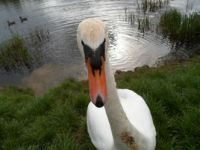 THATS CLOSE ENOUGH THANK YOU