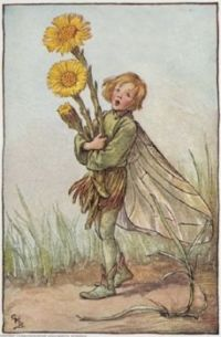 colt's foot fairy