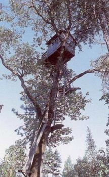 'This Tree House needs an elevator..!!'