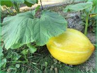 Yellow ball, Žlutý míč