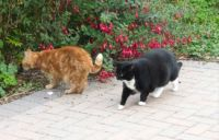 Ferdy and Sophie - inspecting the garden